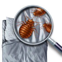 Bedbug Infestation on bed shown with magnifying glass